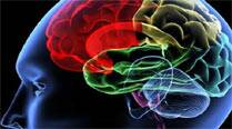 Brain hard-wired to link what we see with what we do