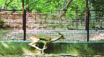 Heritage panel picks holes in BMC's Byculla zoo makeover plan