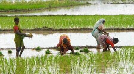 Farm, services fuel states' GDP growth, notfactories