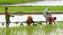 Global price boom improved farmers' terms of trade under UPA:Panel