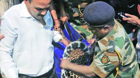 After 7-hour rescue operation, leopard caged in Vasai