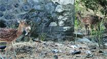 School kids 'adopt' spotted deer at Sanjay Gandhi National Park