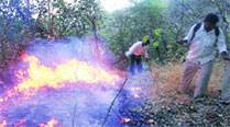 Forest fire at SGNP, sixth in one week