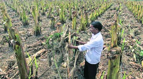 Official statistics reveal that crops over 18 lakh hectares of cultivated land spread over 28 districts in Maharashtra have been damaged.