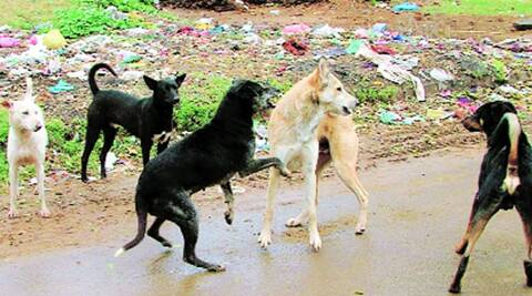 The survey found the average percentage of sterilised stray dogs in the city was 77 per cent