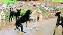'No. of strays in western suburbs 8 times more than in southMumbai'
