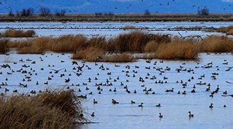 There are approx 23,900 wetlands in Gujarat, which comprises coastal, inland and small wetlands, ISRO survey says.