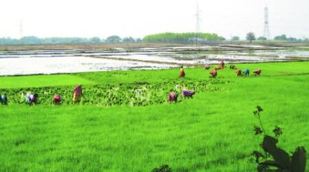 Owing to good monsoon, 64 % sowing of kharif crops complete