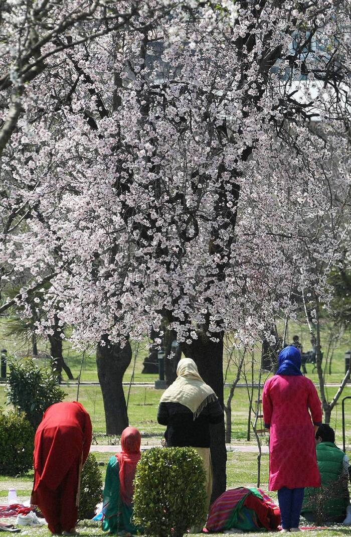 A group of women offering prayers under an almond tree at Badamwari. (PTI)