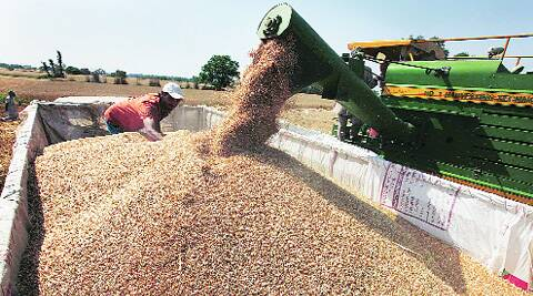 A wheat-harvesting machine at work in Dharmgarh village, Mohali, on Saturday. (Jasbir Malhi)