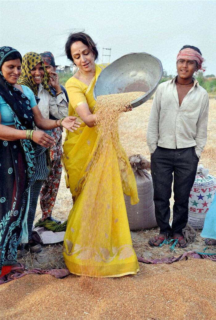 BJP candidate Bollywood actress Hema Malini tries winnowing of wheat during her election campaign in Mathura. (PTI)