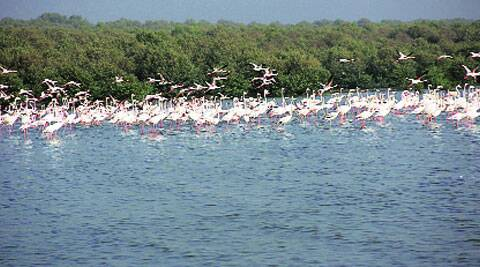 Visitors will also get a chance to see flamingos and other coastal birds from watchtowers. (Express archive)