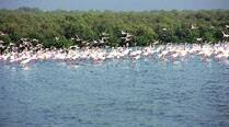 Forest dept, CIDCO plan mangrove wetland centre in Navi Mumbai