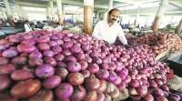 40% crop destroyed, onion prices may shoot up again