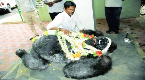 Pandyan abruptly called the zoo staff and said he was embarking on a day's pilgrimage to Subramanya temple in Dakshina Kannada.