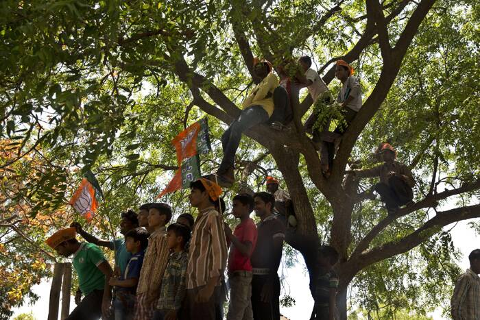 Village boys climb on tree tops to listen to BJP candidate Smriti Irani at an election rally in Amethi. (AP)