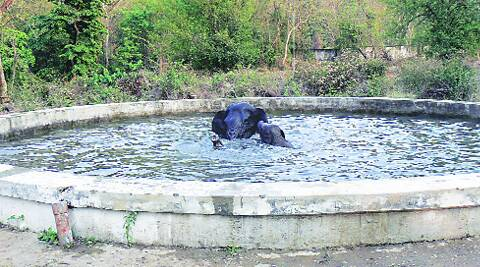 The elephant and her calf struggle in the 10-foot deep tank in Narangi cantonment.                  (Photo courtesy: Defence PRO)