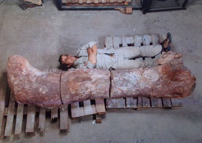 The 65-feet-tall new species of titanosaur, 130 feet in length and weighing 77 tonnes, is much heavier than the previous record holder Argentinosaurus, palaeontologists said.<br />A technician lies next to the femur of a dinosaur at the Egidio Feruglio Museum in Argentina's Patagonian city of Trelew. (Source: Reuters)