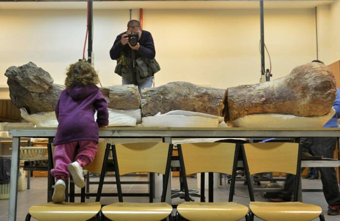 "The palaeontologists unearthed the partial skeletons of seven individuals - about 150 bones in total - all in ""remarkable condition"".<br />A girl looks at the original fossilised femur of a dinosaur displayed on exhibition at the Egidio Feruglio Museum. (Source: Reuters)"