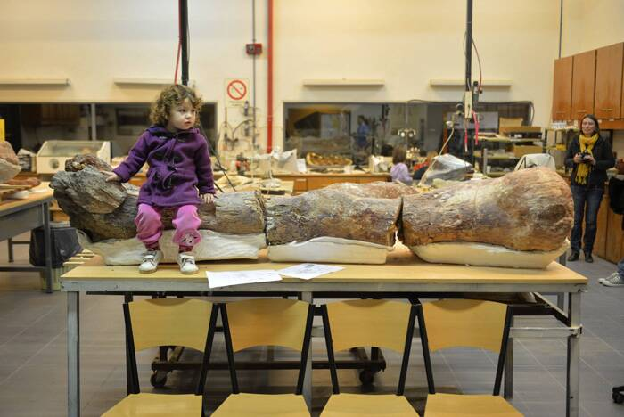 The giant herbivore lived in the forests of Patagonia between 95 and 100 million years ago, based on the age of the rocks in which its bones were found.<br />A girl sits over the original fossilised femur of a dinosaur displayed on exhibition. (Source: Reuters)