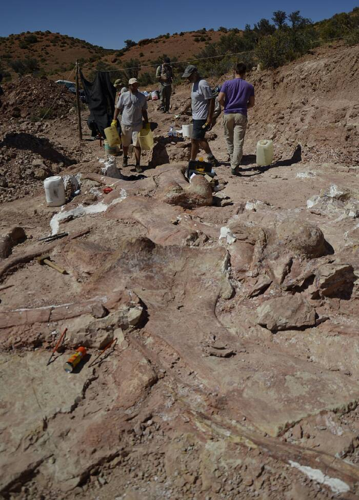 The remains of the enormous herbivore dating from the Late Cretaceous period were first discovered by a local farm worker in the desert near La Flecha, about 250km west of Patagonia, the 'BBC News' reported.<br />A team of paleontologists working at the site where the bones of a sauropod dinosaur were unearthed. (Source: AP)