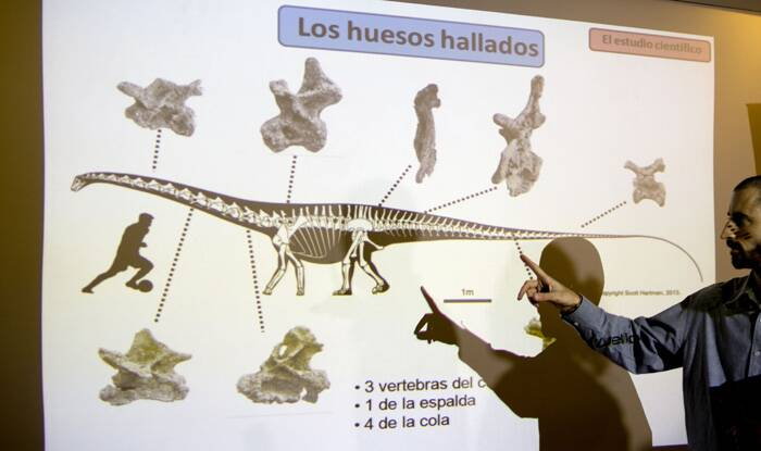 "However, despite its magnitude, it does not yet have a name, the report said. ""It will be named describing its magnificence and in honour to both the region and the farm owners who alerted us about the discovery,"" researchers said.<br />Paleontologist Pablo Gallina speaks to the press about a newly discovered dinosaur discovered in Argentina as he points to an illustration that reads in Spanish ""Bones recovered"" in Buenos Aires, Argentina. (Source: AP)"