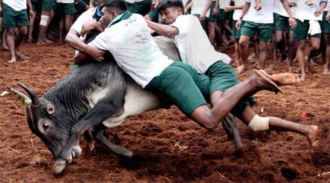 The SC had also once noted that Jallikattu was nothing but a sport inflicting massive cruelty to animals. (Photo: PTI)