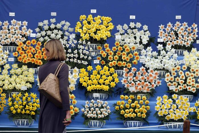 A woman looks at a display of flowers at the Chelsea Flower Show. (Source: Reuters)