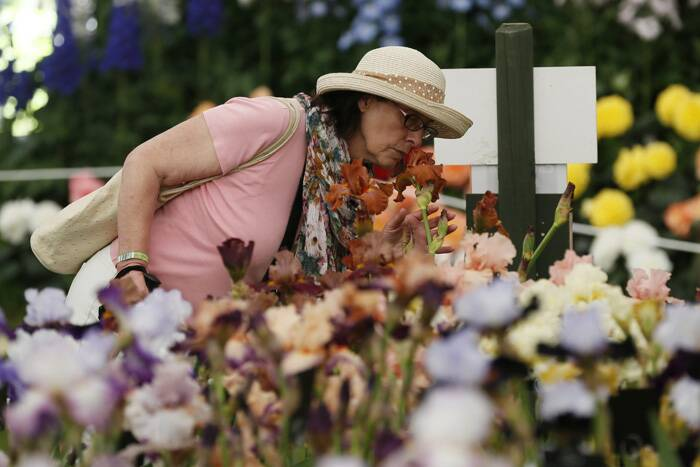 A visitor smells an Iris 'Astana' at the Chelsea Flower Show. (Source: Reuters)