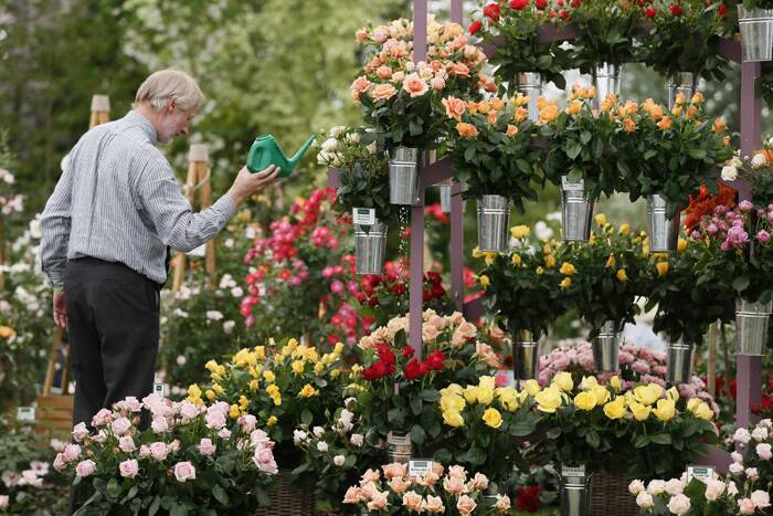 A man waters Roses during media day at the Chelsea Flower Show. (Source: Reuters)