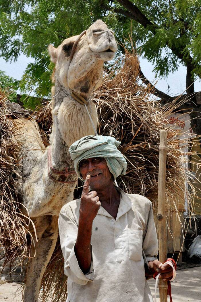 A camel man displays the indelible ink mark on his finger after casting his vote for the last phase of Lok Sabha polls in Jaunpur on Monday. (PTI)