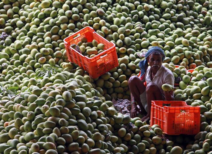 According to market sources, arrival was delayed by several days due to erratic winter season last year and unseasonal rains during last few months in the state, which had damaged crop of varieties like Kesar, Alphonso and Rajapuri.<br />A labourer sorts mangoes at a fruit market in Hyderabad, India. (AP)