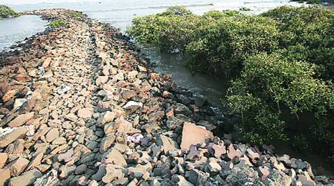 The refilling work done near mangroves forest in Colaba. (Source: Express photo by Pradip Das)
