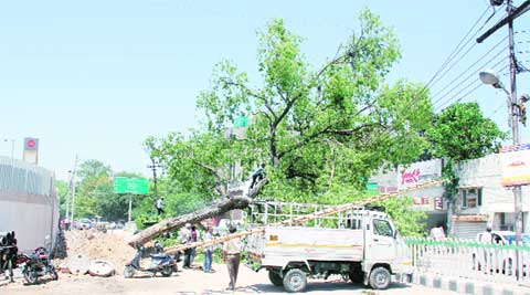 Trees fall over power supply lines in Ludhiana.
