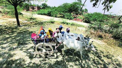 Villagers on the way to a polling booth at Thakurain Khera in Rae Bareli.Ravi Kanojia