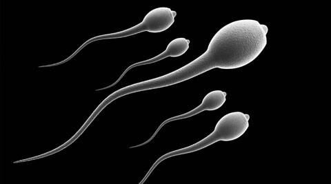Men who feel stressed are more likely to have lower concentrations of sperm in their ejaculate.