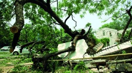 Delhi roads were littered with trees which fell during Friday's storm. Renuka Puri