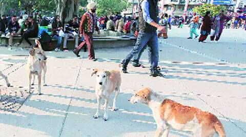 At Plaza in Sector 17, Chandigarh. (Source: Express photo)