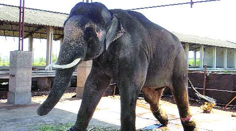 The veterinary officer from Kerala, Dr Sasindradev, had recommended that Sunder be shifted immediately, fearing further injury.