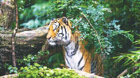 With Project Tiger coverage, the Bor Wildlife Sanctuary notified by the state in 1970 would now receive funding and technical support to strengthen tiger conservation.
