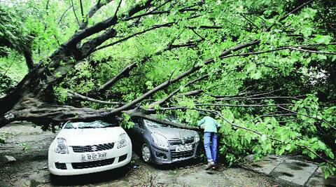 A tree crushed two cars parked at IP Bhawan during the storm on Friday. Ravi Kanojia