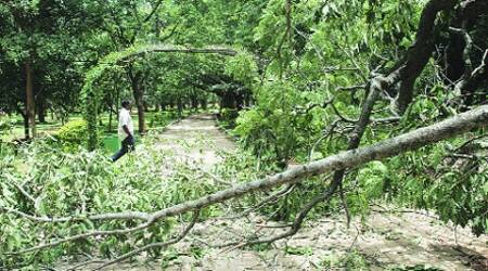 Lack of staff, poor equipment and 'paucity of funds' have affected several gardens, including Cubbon Park.