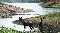 SGNP plans watershed management to 'stabilise' drinking watersupply