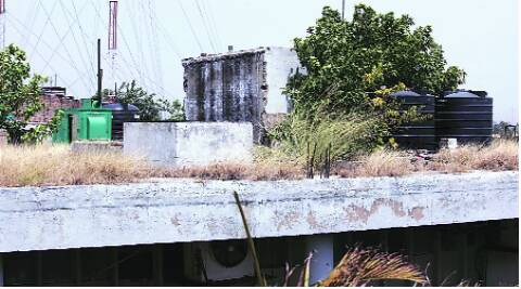 Trees and bushes atop one of the old buildings in Sector 17, Chandigarh.(Source: Express photo by Jaipal Singh)