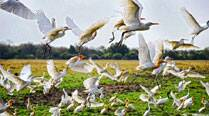 500 to flock to city for meet on birds