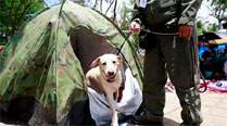 China deploys more police dogs to beef up anti-terror drive