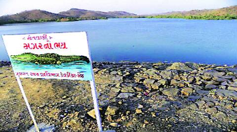 A signboard put up by forest department to warn of crocodile presence along Narmada river. (Source: Express photos)