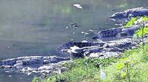 croc-s