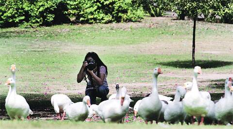 A girl takes advantage of the light to try her hand at photography at Lodhi Gardens on Sunday. (Source: IE photo by Ravi Kanojia)