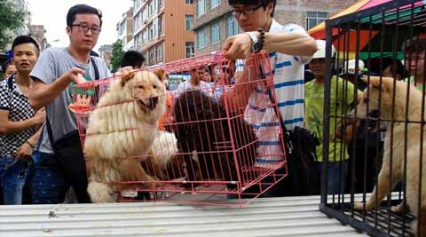 About 48 restaurants in Yulin still served dog dishes. (Source: Reuters)